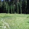 Cornpatch Meadow
