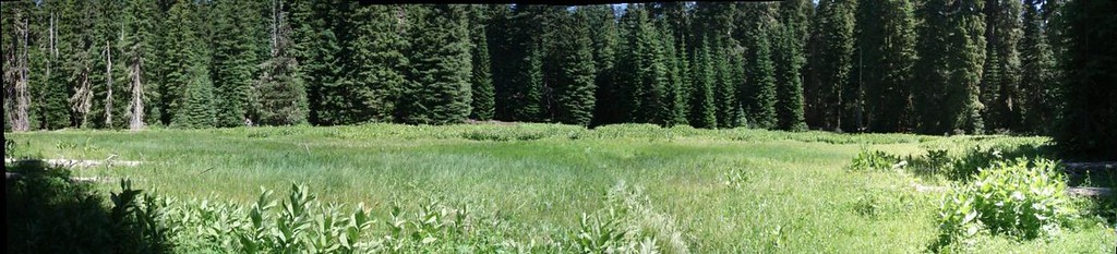Lodgepole and PCT