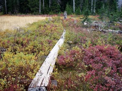 Planks through marshy areas - Monon Lake