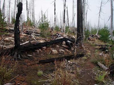 Nature starting to rebuild - Mon-Olallie lake trail