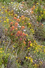 Sand Hill Trail, wildflowers form wonderful carpets!