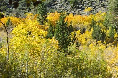 Rock Creek Canyon