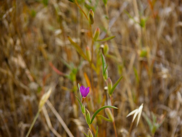 2011 07 16 Long Ridge