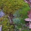 Mosses and lichen