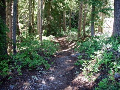 Pansy Lake trail
