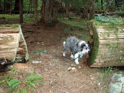 THAT is a cut log!!!!