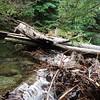 Old bridge is now a logjam on East Gold Creek