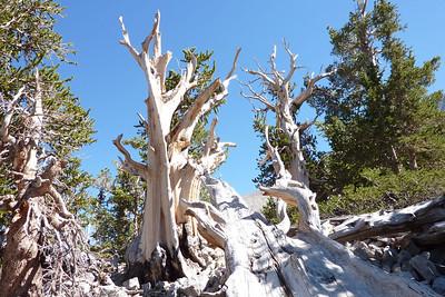 Bristlecone Trail Great Basin National Park. Sept. 2012