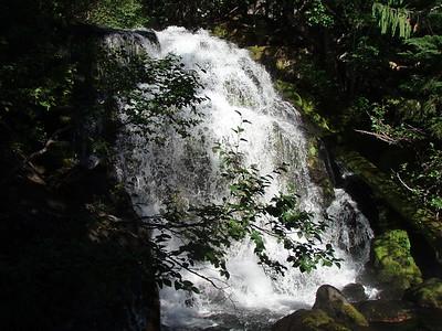 Brietenbush Cascades top tier