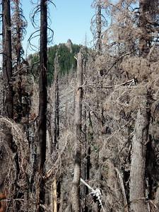 Dinah-Mo peak through the burn area (view lake fire in 2010)