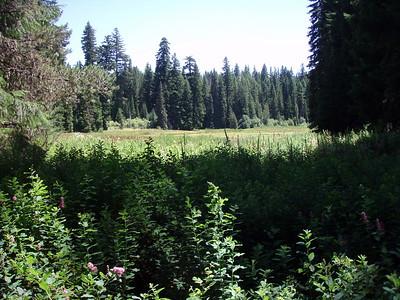 Clackamas Lake (looks more like a bog to me!)