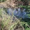 The lower pond - just below the upper pond at Hillockburn spring.