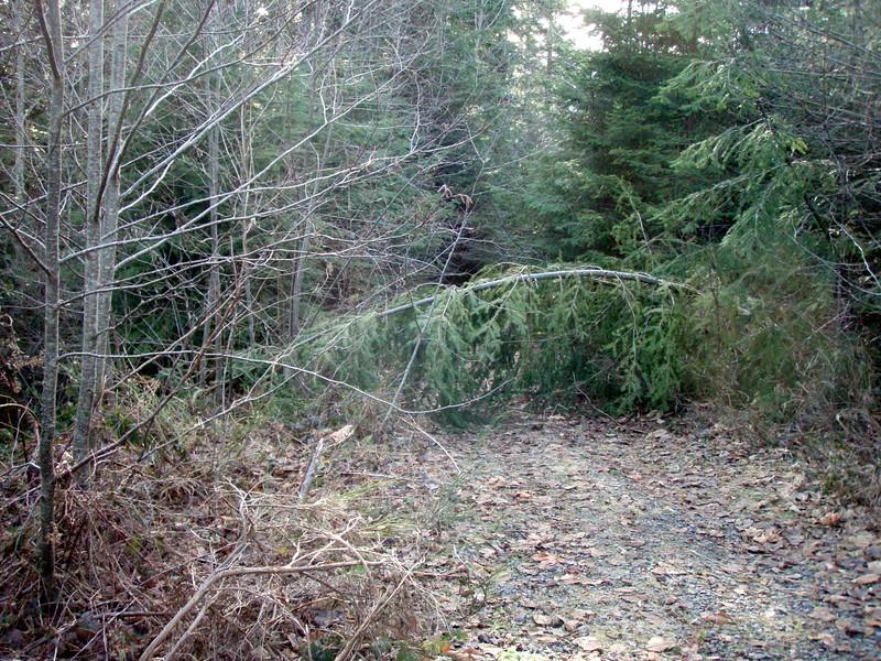Abandoned Road on the upper Gipper Trail/Hilockburn area