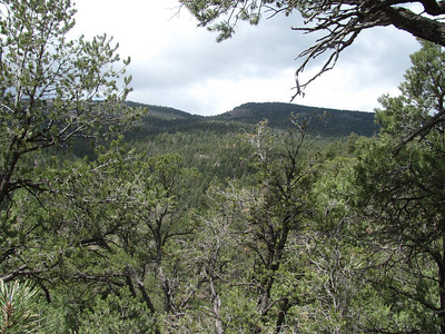 Sandia Mtns. - Doc Longs-Cienega Horse Bypass-Faulty-Bill Springs Trails Hike  5-6-13