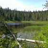 Anvil Lake - shallow and brushy