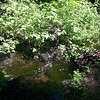 Anvil Creek