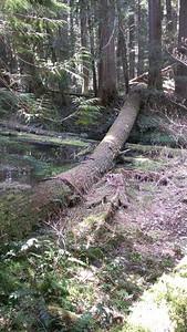 The log we crossed on