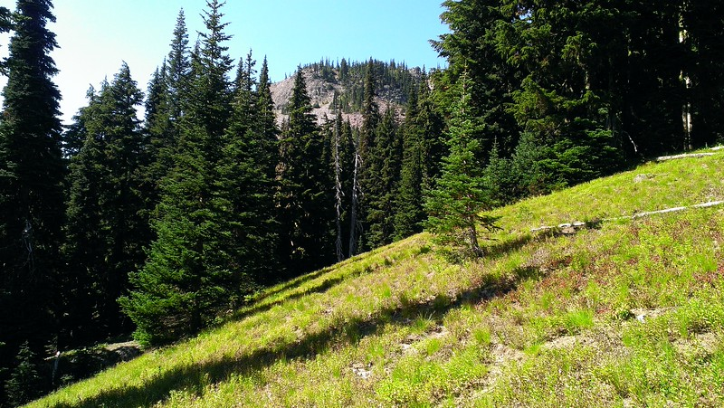 Sidehill Meadow on the Goat Ridge Trail