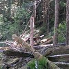 Forest down near South Fork of the Roaring River