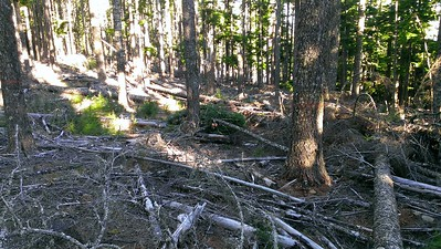 There has been lots of thinning done in this area.  Although they left a LOT of debris
