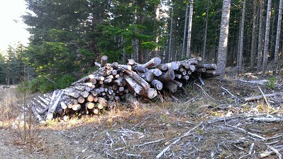 What a waste!  There is probably 15 cords of firewood sitting here