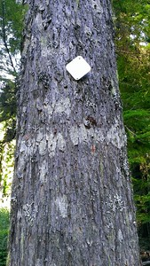 This tree had this triangle on both sides of the tree.  No markings, just a silver triangle.
