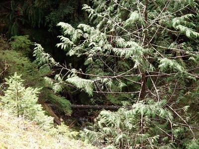 Waterfall on side creek - South Fork Clackamas River