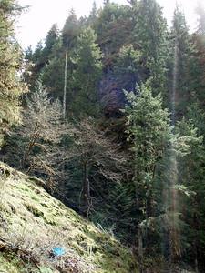 Interesting Rock Formation - East Side of South Fork Clackamas River