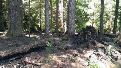 Damage from campfire at Huxley Lake