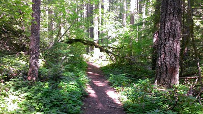"Interesting ""Arch"" tree on Huxley Lake Trail"