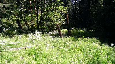Interesting meadow/marshy area on cross country travel near Huxley Lake trail