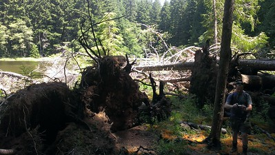 Downed trees next to Huxley Lake