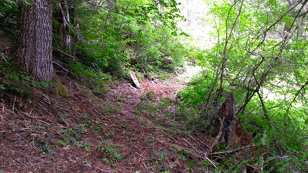 Upper end of the MP3 (milepost 3) trail