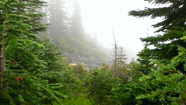 """Looking at the """"point"""" of the overlook on Mt Mitchell"""