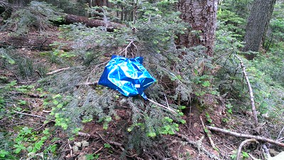 Where I found the balloon - I took it home and threw it away to help clean up the woods