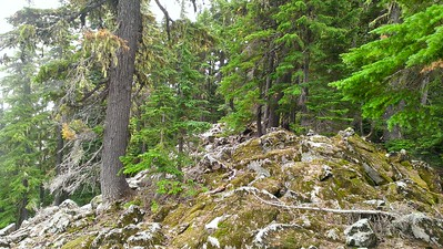 Rock field on east end of Rimrock trail