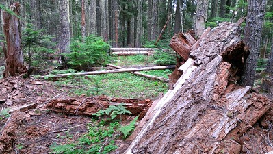 This is the blowdown mess where MP3 meets Rimrock.  The MP3 trail is under the logs in the middle of the photo - and the big log in the foreground obliterated the view of the tread