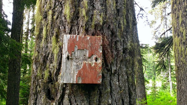 This appears to be a trail number sign, although it looks like a woodpecker got to it or something.