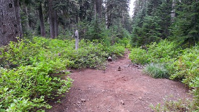 Where Grouse Point meets the old road (which is now a trail) that heads up to Frazier Turnaround