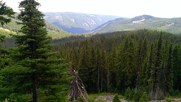 Looking up Shellrock creek drainage from the top of Frazier Mountain