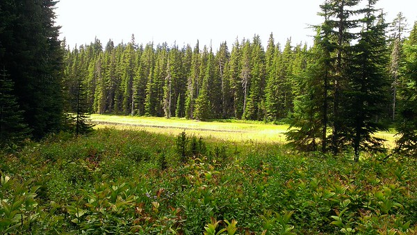 Cache Meadow itself