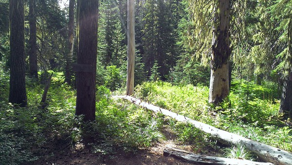 Cripple Creek trail taking off from Cache Meadow
