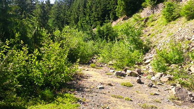 The old road wtih lots of alders growing in it.
