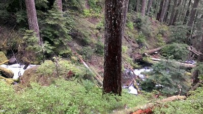 Downstream of Music Creek Falls