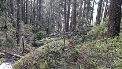 Downstream from Music Creek Falls