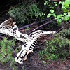 Two elk skeletons we found along the road