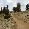 Discovery Trail, Ancient Bristlecone Pines, Schulman Grove, White Mountains