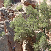 Pinnacles National Park California<br /> Moses Spring Trail to Bear Gulch Caves<br /> Climbers
