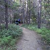 The beginning of the Stuart Lake trail - goes through small timber