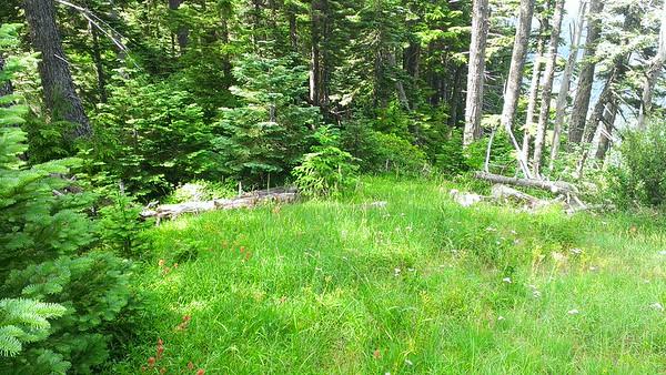 Mini meadow on Fish Creek Mountain trail